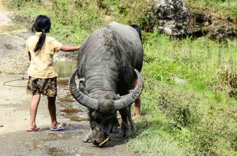 Dans la campagne toraja, Sulawesi - Indonésie -
