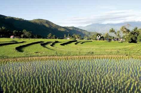 Belles rizières au nord de Rantepao, Sulawesi - Indonésie -