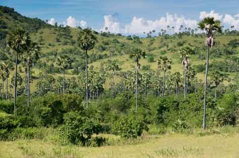 Balade sur l'île de Rinca, archipel de Komodo - Indonésie -