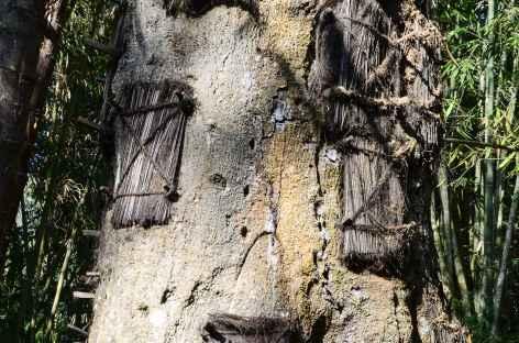 Site de Kambira, tombeaux de bébés creusés dans les arbres, Pays Toraja, Sulawesi - Indonésie -