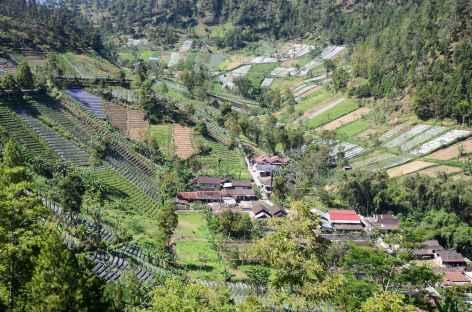 Marche vers les plantations de Tawangmangu, Java - Indonésie -