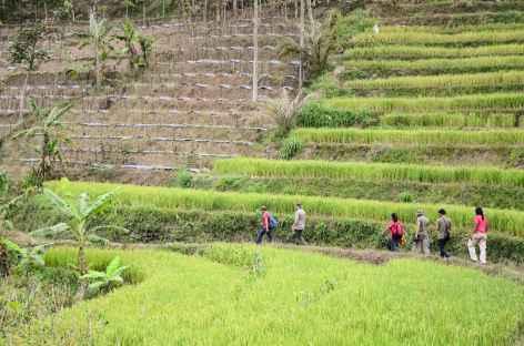 Marche vers le temple hindouiste de Selogryo, flancs du Mont Sumbing, Java - Indonésie -