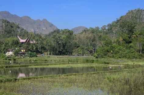 Campagne toraja vers le Mont Kandora -