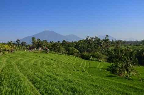 Rizières en terrasses vers Wongayagede, au loin le volcan Batukaru, Bali - Indonésie -