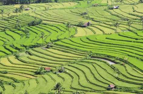 Rizières dans les environs de Munduk, Bali - Indonésie -