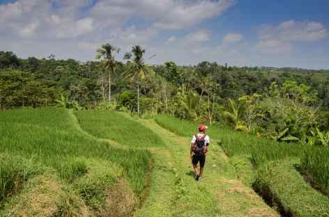 Rizières en terrasses vers Jatiluwih, Bali - Indonésie -