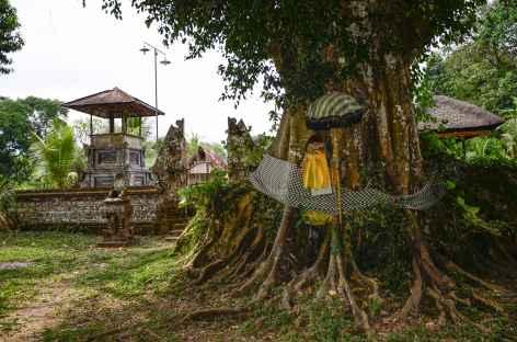 Banian, arbre sacré, Bali - Indonésie -