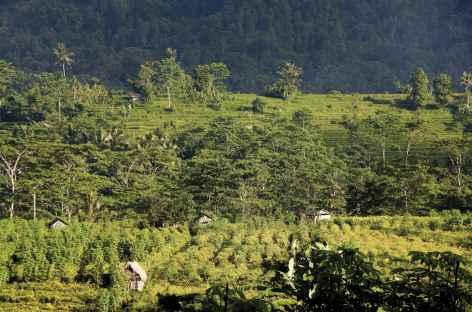 Dans les alentours de Sidemen, Bali - Indonésie -