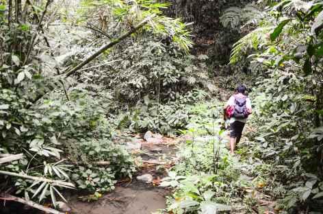 Marche dans la forêt entre Jatiluwih et Wongayagede, Bali - Indonésie -