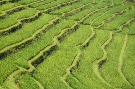 Rizières de Belimbing, Bali - Indonésie -