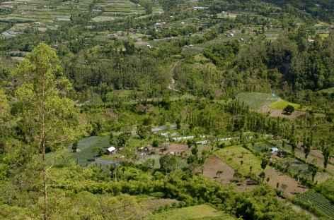 Plantations dans la caldeira du Batur, Bali - Indonésie -