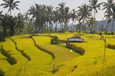 Rizières à Sidemen, Bali - Indonésie -