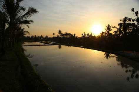 Rizières en eau au coucher du soleil, Bali - Indonésie -