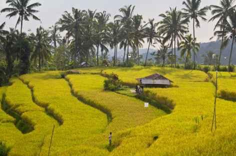 Rizières de Bali, vers Sidemen, Bali - Indonésie -