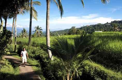 Marche dans les rizières et plantations vers Munduk, Bali - Indonésie -
