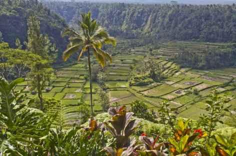 Rizières de Bali, Bali - Indonésie -