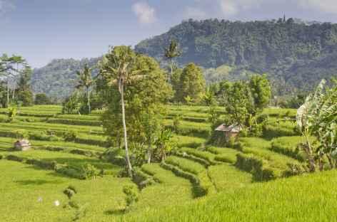 Rizières en terrasses vers Sidemen, Bali - Indonésie -