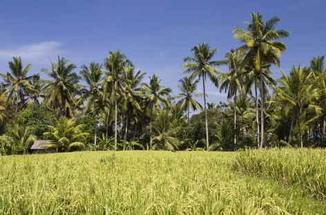 Rizières vers Tanah Lot -