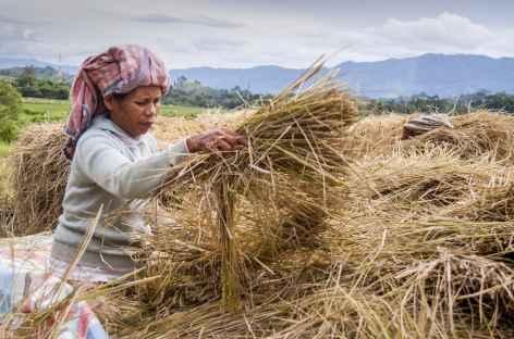 Dans la campagne sur l'île de Samosir, Sumatra - Indonésie -