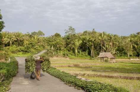 Campagne niassienne..., Sumatra - Indonésie -