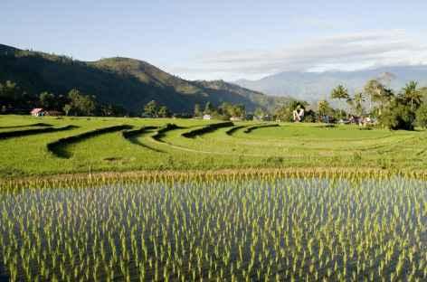 Belles rizières au nord de Rantepao, Pays Toraja, Sulawesi - Indonésie -