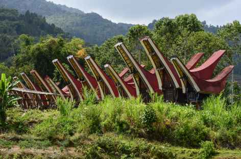 Village traditionnel toraja, Sulawesi - Indonésie -