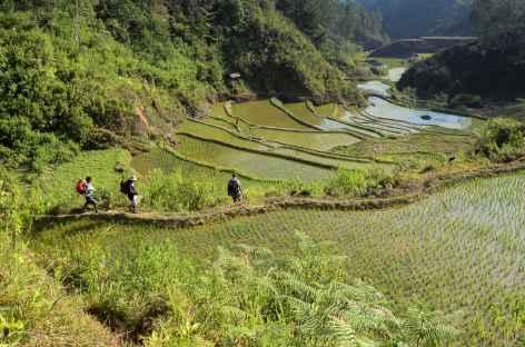 Trek en pays toraja, vers la rivière Sadan, Sulawesi - Indonésie -