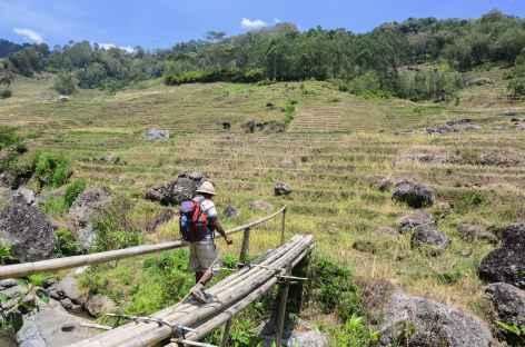 Vers les jolies rizières de Salu, Pays Toraja, Sulawesi - Indonésie -