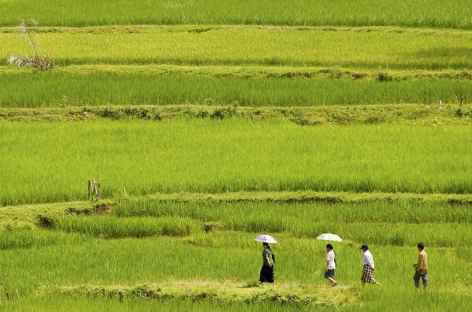 Rizières au nord de Rantepao, Pays Toraja, Sulawesi - Indonésie -