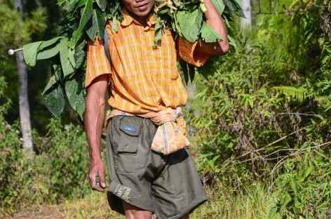 Rencontre en chemin..., Pays Toraja, Sulawesi - Indonésie -