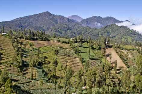 Plantations vers les volcans Bromo et Semeru, Java - Indonésie -