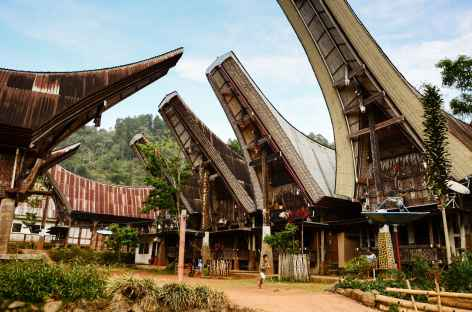 Extension pays Toraja -