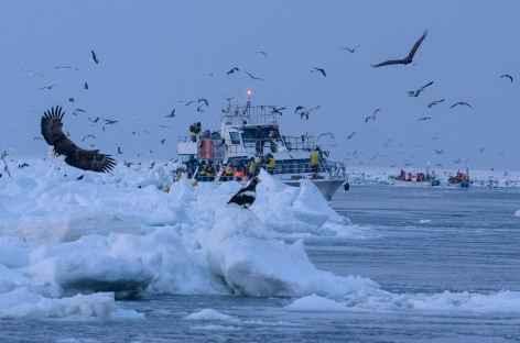 Sortie en brise-glace à Rausu, Hokkaido - Japon -