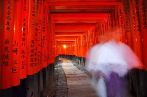 Fushimi Inari avec ses milliers de toriis, Kyoto - Japon -