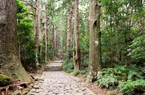 Chemin traditionnel de Daimonzaka menant à Nachi Taisha - Japon -