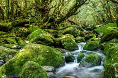 Forêts moussues de Yakushima - Japon -