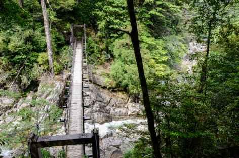 Rando dans la vallée de Shiratani Unsuikyo, île de Yakushima - Japon -