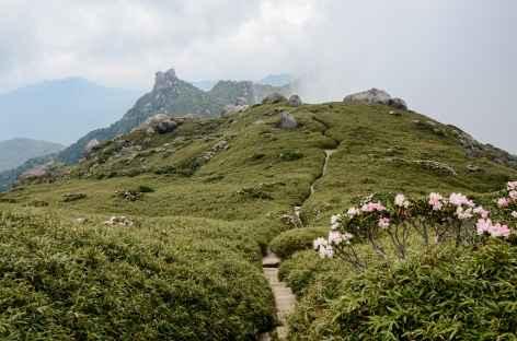 Rando sur les hauteurs de Yakushima - Japon -