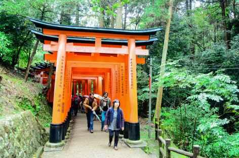 Les nombreux tunnels de torii à Fushimi Inari, Kyoto - Japon -