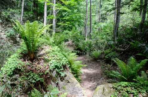 Montée en forêt vers le sommet de Chogatake (2677 m) - Japon -