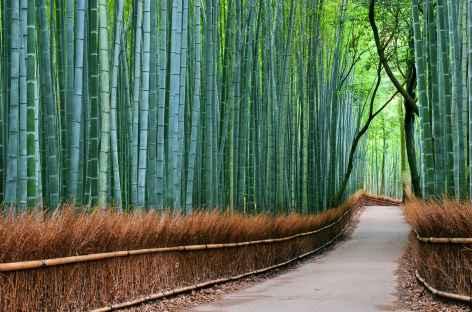 Bambouseraie d'Arashiyama, Kyoto - Japon -