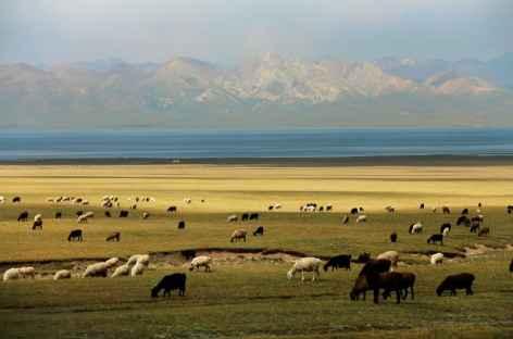 Balade au lac Song Kul - Kirghizie -