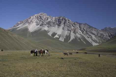 Plaine de paturage - Kirghizie -