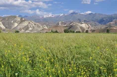 Plaine agricole - Kirghizie -