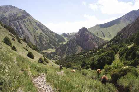 Sentier entre Sary Bel et Kochmoinok - Kirghizie -