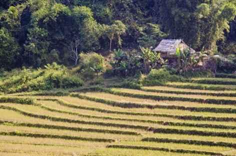 Paysage de rizière - Laos -