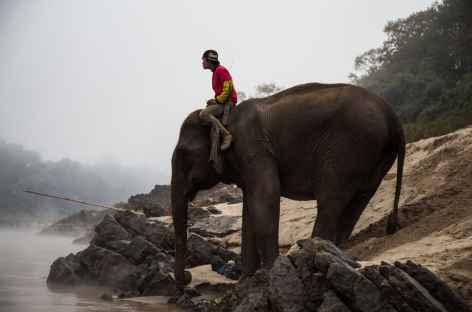 Cornac et son éléphant à Pakbeng Laos -
