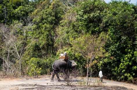 La balade à dos d'éléphant Laos -