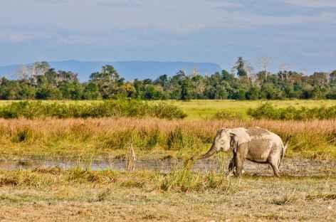 Balade en éléphant sur le Phou Asa - Laos -
