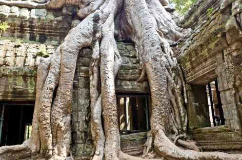 Le temple de Ta Prohm à Angkor - Cambodge -